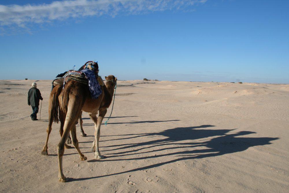 nabi suka travelling lho