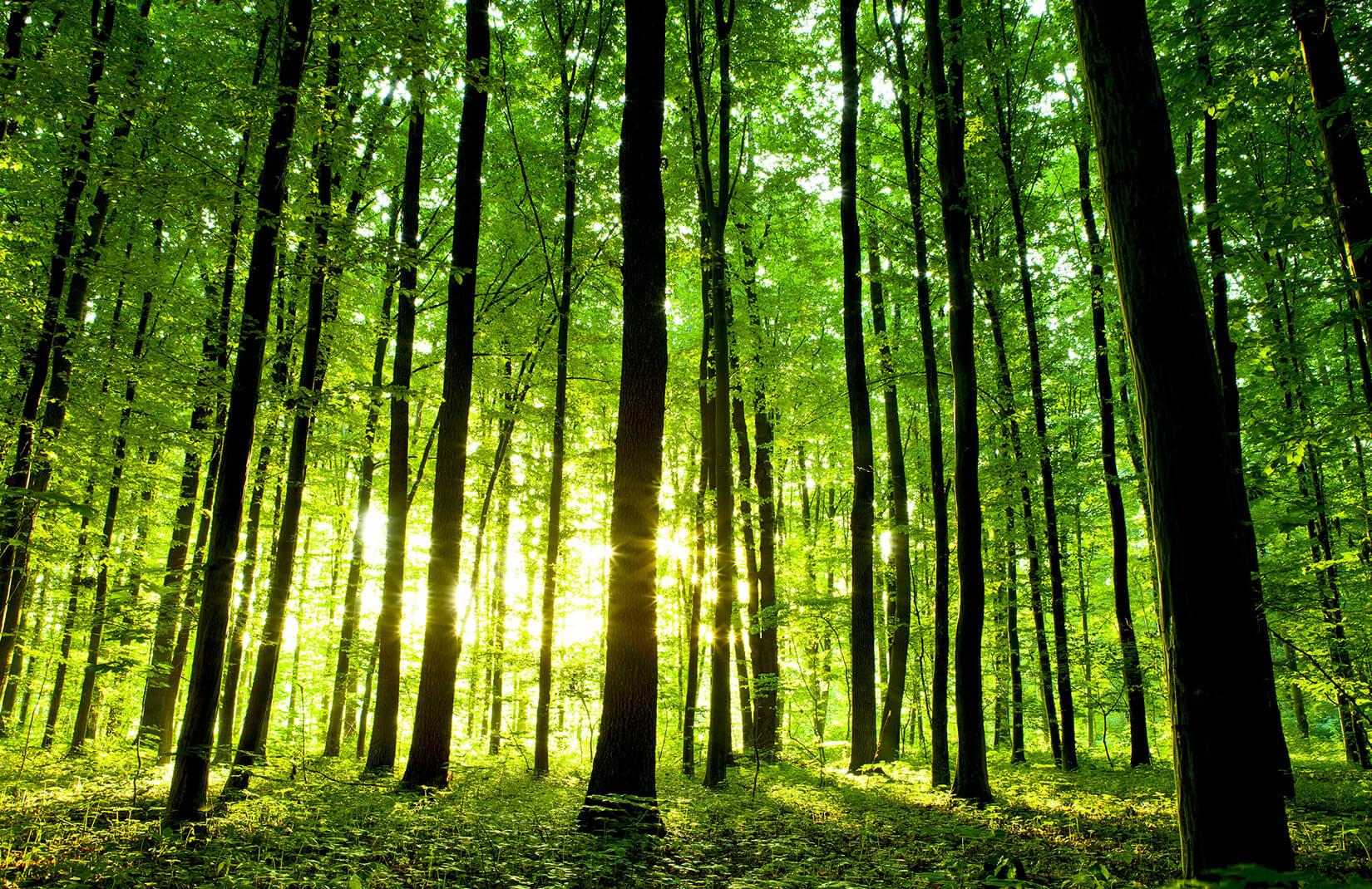 gerakan satu juta pohon